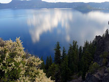 Crater Lake. View of Crater Lake, the incredible blue with clouds reflection in it. Bush with white flowers in the foreground. Taken at Crater Lake National Park Royalty Free Stock Image