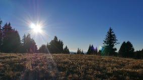 Sunshine Grassland stock photography