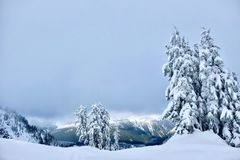 White Christmas. Trees covered with snow. Crater Lake National Park in winter. Oregon. United States stock photo