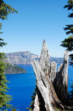 Crater Lake View. View of Crater Lake, Oregon, from the rim framed by tree trunk Stock Images