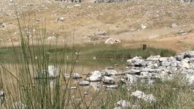 Crater lakeside zoom out. Crater lakeside, stones in the water, zoom out stock video footage