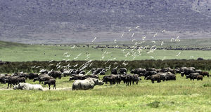 The Crater in Ngorongoro Conservation Area, Tanzania Stock Image