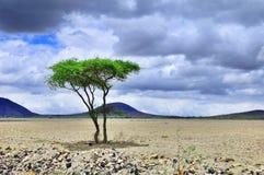 Crater Ngorongoro Stock Image