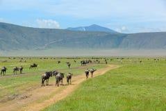 Crater Ngorongoro, Tanzania Royalty Free Stock Photography
