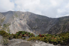 Crater plants. There are some plants on a Volcano crater in Costa Rica South America Stock Photography