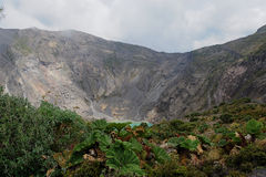 Crater plants. There are some plants on a Volcano crater in Costa Rica South America Stock Images