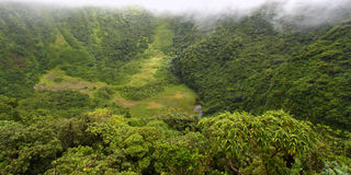 The Crater - Saint Kitts. Fog descends into The Crater below Mount Liamuiga on St Kitts Stock Photography