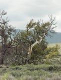 Crateras do parque nacional da lua em Idaho foto de stock