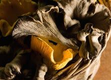 Craterellus cornucopioides και chanterelles στοκ φωτογραφία με δικαίωμα ελεύθερης χρήσης