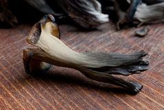 Craterellus cornucopioides - black trumpet Royalty Free Stock Photography
