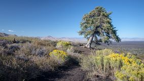 Craters of the Moon National Monument, Idaho royalty free stock images