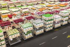 Crates with flowers on a Dutch flower auction Royalty Free Stock Photos