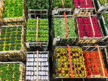 Crates with flowers and plants on a flower auction Royalty Free Stock Photo