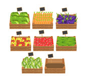 Crates with fresh vegetables. Stock Images