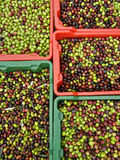 Crates of freshly olives Royalty Free Stock Images