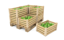 Crates full of apples on wooden palette Royalty Free Stock Photo