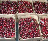 Crates full and basket of great and juicy ripe red cherries on s Royalty Free Stock Photos