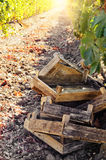 Crates for grape harvesting Stock Images