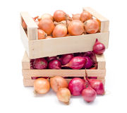 Crates with onions Royalty Free Stock Photography