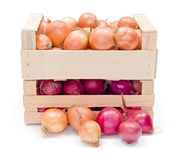 Crates with onions Stock Images