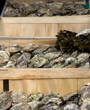 Crates of oysters Royalty Free Stock Photo