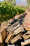 Crates for grape harvesting Stock Photography
