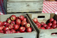 Crates of red apples. Wooden crates filled with freshly picked red apples Royalty Free Stock Image