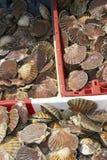 Crates of scallops Stock Photo