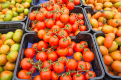 Crates of tomatoes Royalty Free Stock Photo