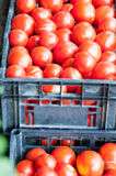 Crates of tomatoes Royalty Free Stock Image