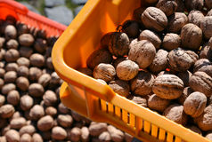 Crates with walnuts Stock Photography