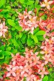Crave flores no parque, textura vermelha das flores, fluxo bonito Fotografia de Stock