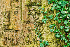 Craved Tree Trunk. Letters and symbols craved into a tree trunk royalty free stock photo