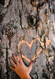 Craving lost love - Carved heart in tree bark. A hand caresses a freshly carved heart and arrow engraved into the bark of a tree. Symbolizes a lost love, a fresh Royalty Free Stock Photo