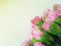 Cravos cor-de-rosa Fotos de Stock