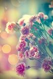 Cravos cor-de-rosa Fotografia de Stock