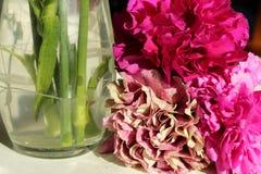 Cravos cor-de-rosa ao lado do vaso de vidro fotografia de stock