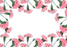 Cravos cor-de-rosa em um fundo branco Fotografia de Stock