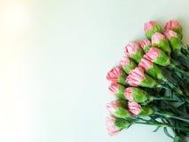 Cravos cor-de-rosa em uma forma do coração Fotos de Stock Royalty Free
