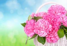 Cravos cor-de-rosa na cesta Fotos de Stock Royalty Free