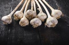 Cravos-da-índia de alho em uma tabela preta de madeira Bulbo fresco do alho com a imprensa de alho do ferro Fundo do vintage Faze Imagem de Stock