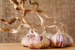 Cravos-da-índia de alho inteiros em um fundo de madeira Imagens de Stock Royalty Free