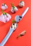 Cravos-da-índia de alho na imprensa de alho Foto de Stock
