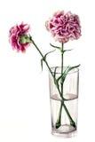 Cravos em um vidro Imagens de Stock Royalty Free