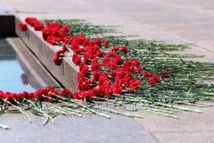 Cravos vermelhos Fotos de Stock