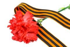 Cravos vermelhos com a fita do ` s de St George isolada no fundo branco 9 de maio dia da vitória na grande guerra patriótica de 1 Fotografia de Stock Royalty Free