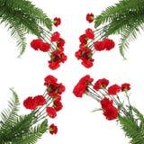 Cravos vermelhos com samambaias Imagens de Stock Royalty Free