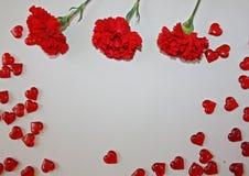 Cravos vermelhos em um fundo branco fotografia de stock
