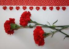 Cravos vermelhos em um fundo branco imagens de stock royalty free