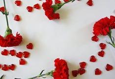 Cravos vermelhos em um fundo branco imagens de stock